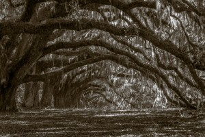 Mary Hulett - Old Charleston Plantation Trees (THIRD PLACE)